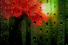 flower-droplets-2